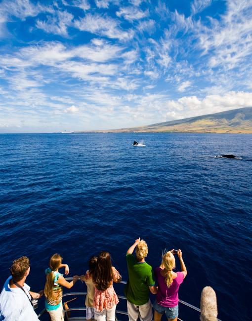ハワイにクジラが来るのはなぜ?