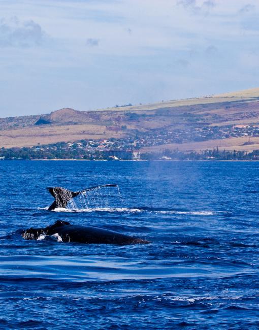 クジラを見るには