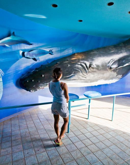 ザトウクジラとは