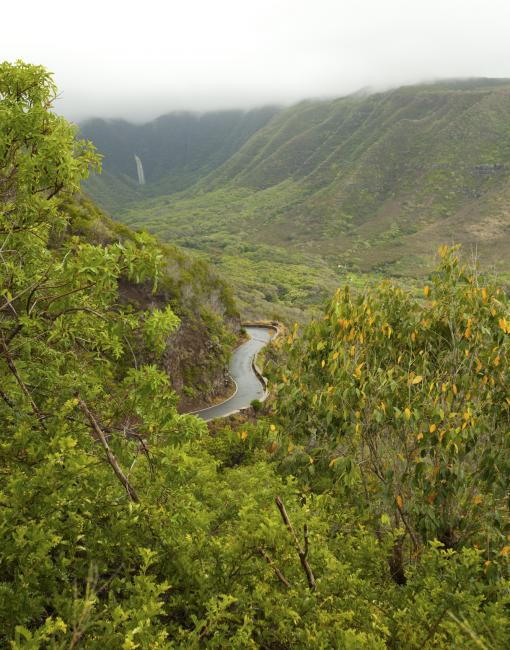Aerial shot of a lush tropical forest in Molokai