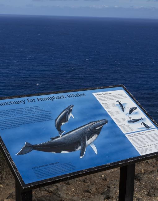 ザトウクジラは保護動物ですか?