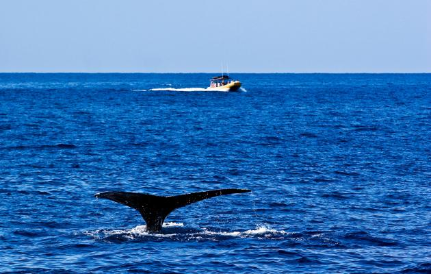 Find More Information About Whale Watching