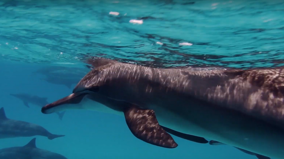 Hawaii Travel Tips: Ocean Conservation video