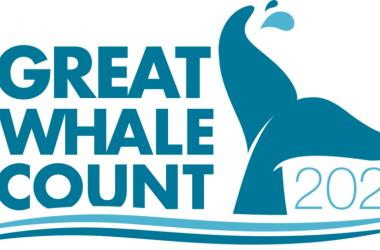Great Whale Count - Month of January