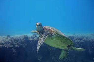 Hawaiian Slack Key Guitar & Ukulele Concert - Sea Turtle Serenad