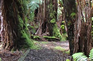 Niaulani Nature Walk
