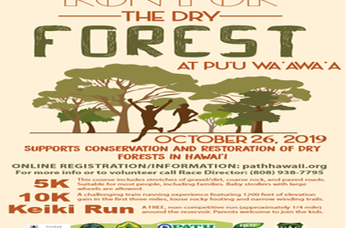 Run For The Dr Forest