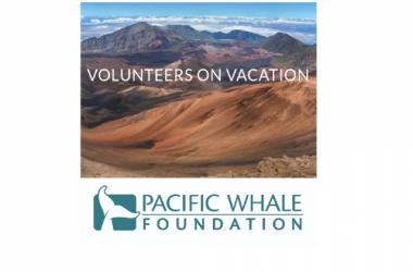 Volunteer at Haleakala with Pacific Whale Foundation