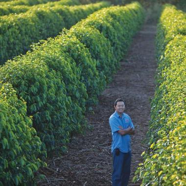 Coffee Field