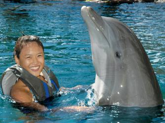 Dolphin Encounter