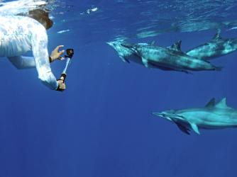 Dolphins and You is a certified sustainable tour company.