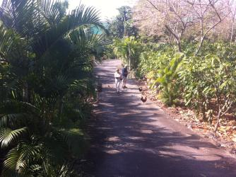 Cacao Farm Orchard Path