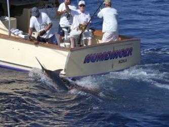 Humdinger Sportfishing Kona