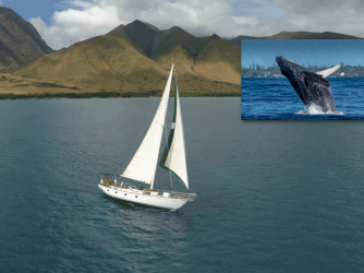 Island Star - Private Sailing Charters Maui