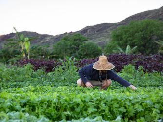 Kahumana Organic Farms Salad Harvest