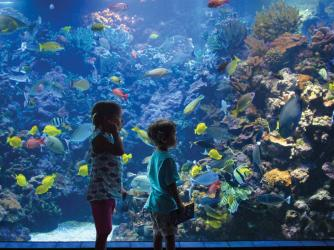 Explore the Living Reef at Maui Ocean Center