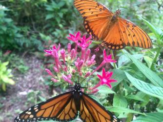 Maui Butterfly Farm