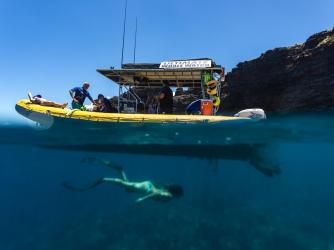 Ultimate Whale Watch & Snorkel Lanai Snorkeling Trip