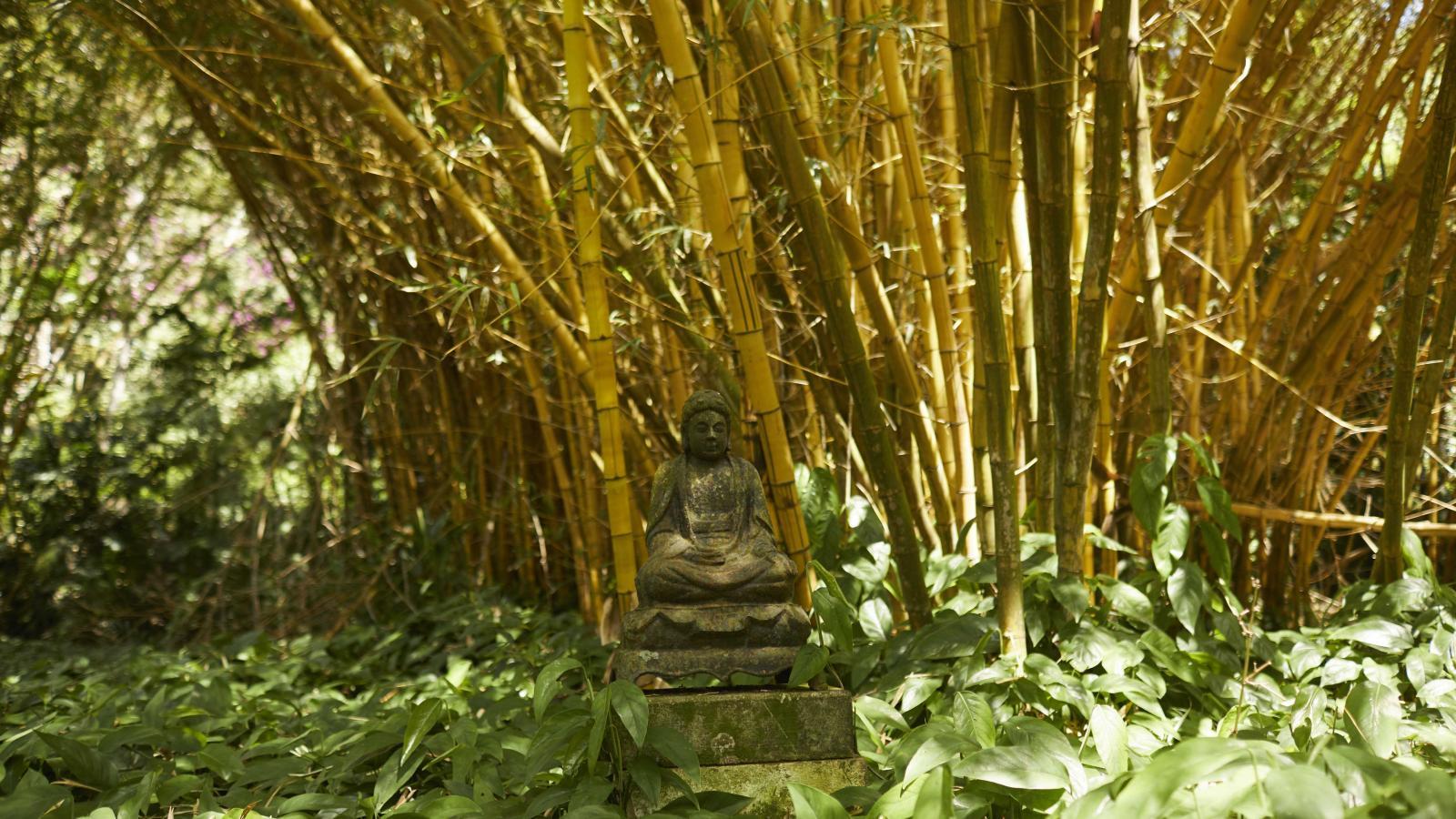 Bamboo Garden at Allerton Garden